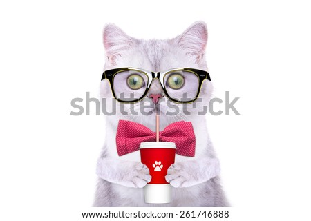 Smart beautiful british cat with a milkshake. Funny animals. Trendy cat dressed in beautiful clothes - stock photo