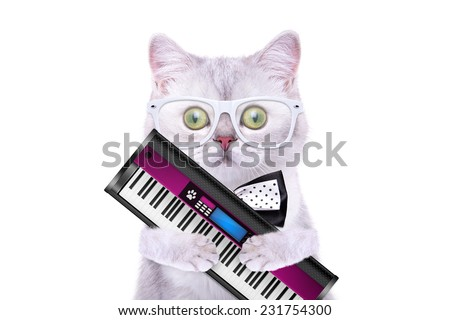Smart beautiful british cat with a musical synthesizer. Funny animals. Trendy cat dressed in beautiful clothes - stock photo