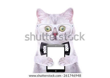 Smart beautiful british cat with a tablet. Funny animals. Trendy cat dressed in beautiful clothes. Hipster cat - stock photo