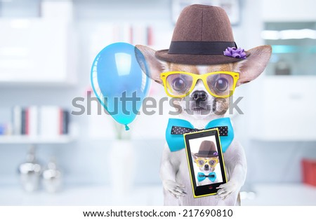 Smart beautiful dog chihuahua photographed themselves on the phone. Funny animals. Fashionable dog dressed in beautiful clothes. Hipster dog - stock photo