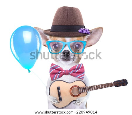Smart beautiful dog chihuahua with a guitar. Funny animals. Fashionable dog dressed in beautiful clothes. Romantic song for lovers - stock photo