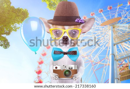 Smart beautiful dog chihuahua with a photocamera. Funny animals. Fashionable dog dressed in beautiful clothes. Hipster dog. Festive walk - stock photo