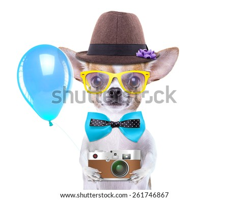 Smart beautiful dog chihuahua with a photocamera. Funny animals. Fashionable dog dressed in beautiful clothes. Hipster dog. Tourists photos