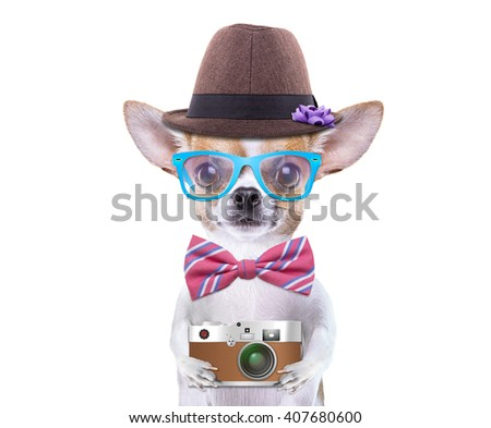 Smart beautiful dog chihuahua with a photocamera. Funny animals. Fashionable dog dressed in beautiful clothes. Hipster dog