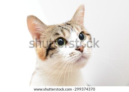 Smart cat - stock photo