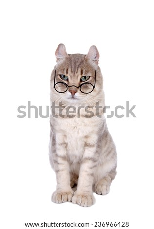 Smart cat in glasses isolated on white background