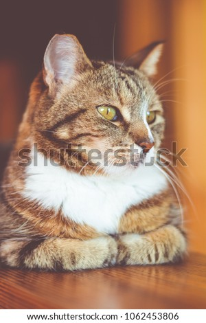 stock-photo-smart-cat-sits-at-the-table-