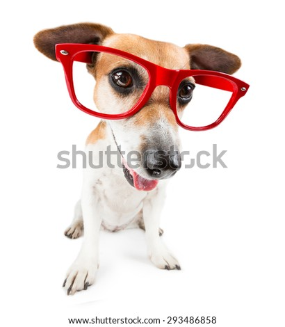 Smart cute puppy Jack Russell terrier - stock photo