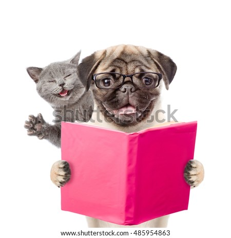 Smart dog and funny cat reading a book. isolated on white background