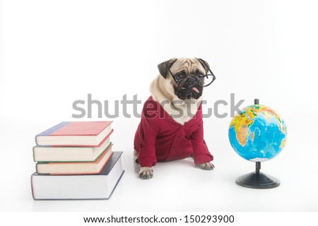 Smart dog. Funny dog in glasses and red clothing sitting near the globe and book stack while isolated on white - stock photo