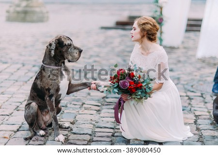 Smart dog gives a pow to the charming blond mistress-bride - stock photo