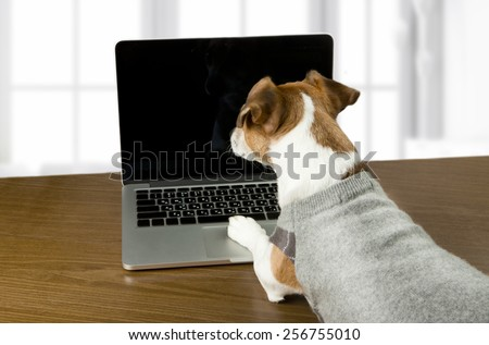 Smart dog Jack Russell terrier works in the office at the computer. Licked. Black screen background you can place your information - stock photo