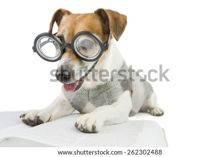 Smart dog wearing glasses and a sweater student studying reading book and summary of lectures  - stock photo