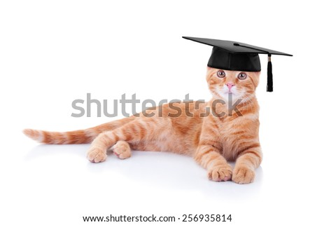 Smart graduate pet cat in graduation cap on white - stock photo