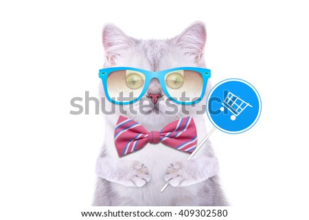 Smart handsome cat with icon basket. Funny animals. Trendy cat dressed in beautiful clothes - stock photo