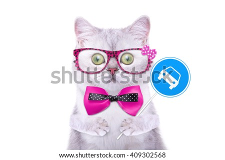 Smart handsome cat with icon car. Funny animals. Trendy cat dressed in beautiful clothes - stock photo