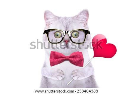 Smart handsome cat with icon heart. Funny animals. Trendy cat dressed in beautiful clothes - stock photo