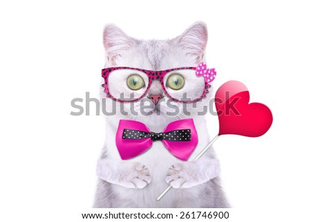 Smart handsome cat with icon heart. Funny animals. Trendy cat dressed in beautiful clothes. Valentine's Day - stock photo