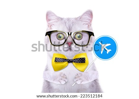 Smart handsome cat with icon plane. Funny animals. Trendy cat dressed in beautiful clothes - stock photo