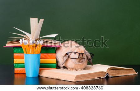 Smart rabbit with eyeglasses sitting on the books near empty green chalkboard - stock photo