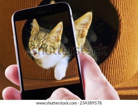 Smartphone in male hand taking a shot of a beautiful small cat - stock photo