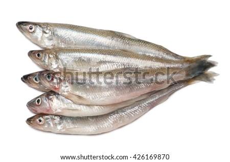 Smelt fishes isolated on white background - stock photo