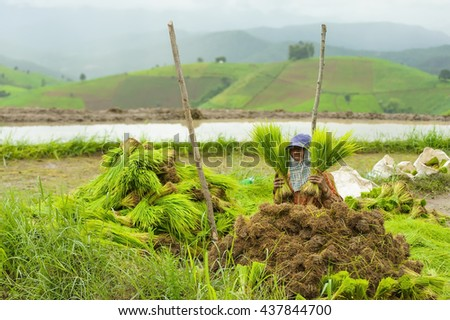 Smile for farmer working in rice fields on mountain