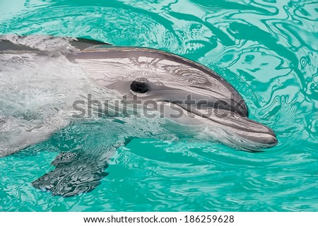 Smiley dolphin