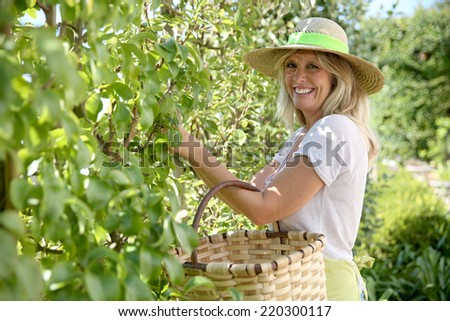 Smiling blond woman picking fruits from tree