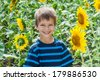 Smiling boy between sunflower on the field - stock photo