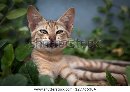 Smiling Cat - stock photo