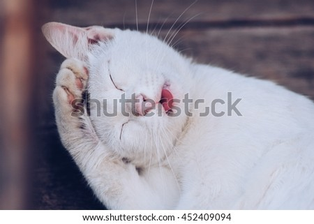 Smiling cat with happiness, blurred