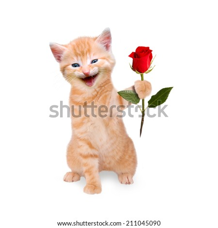 smiling cat with red rose isolated on white background