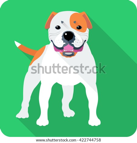 Smiling dog American Bulldog breed standing icon flat design