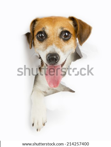 smiling dog looking out from a hole in a paper poster advertising banner. White place for your text - stock photo