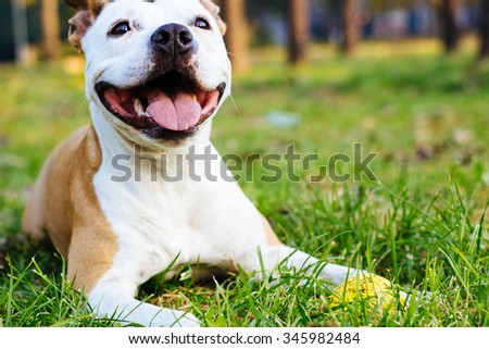 Smiling dog with ball