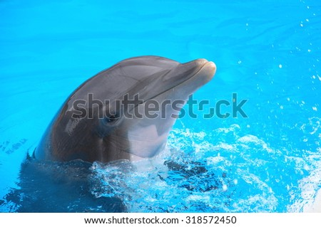 Smiling dolphin on Tenerife, Canary Islands, Spain - stock photo