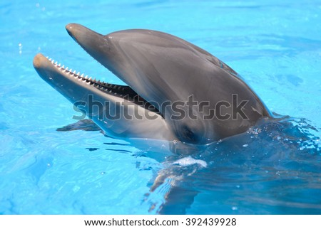 Smiling dolphin. Tenerife. Canary Islands. Spain
