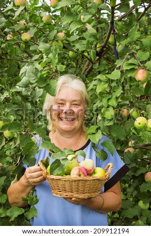 Smiling elderly woman in the garden with apples.  August