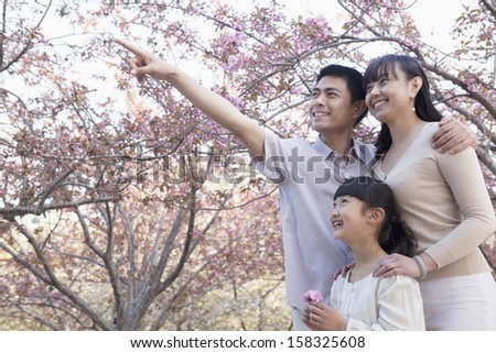 Smiling family looking up and admiring the cherry blossoms in the park - stock photo