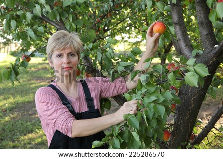 Smiling female farmer picking apricot fruit from tree in orchard