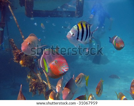 Smiling fishes - stock photo