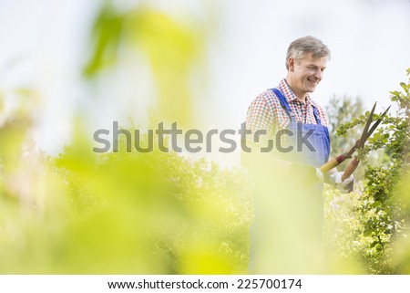 Smiling gardener trimming tree branches at plant nursery - stock photo