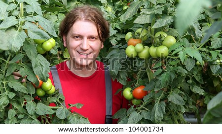 Smiling greenhouse worker standing among tall tomato plants. Greenhouse produce. Food production. Tomato growing in greenhouse.
