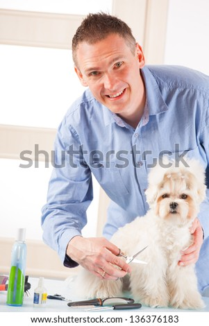 Smiling man grooming a dog purebreed maltese.