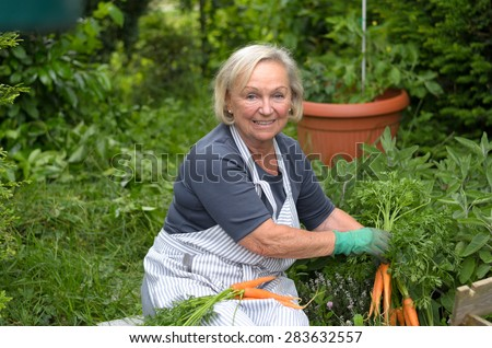Smiling Middle Aged Blond Woman at the Garden Holding Carrots From her Green Plants While Looking at the Camera.