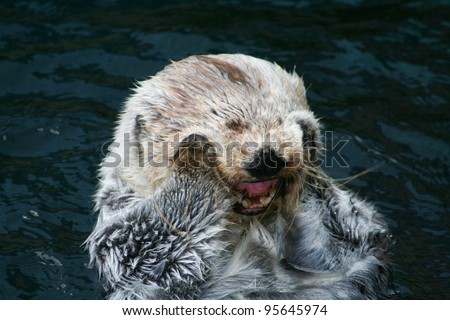 Smiling Otter - stock photo