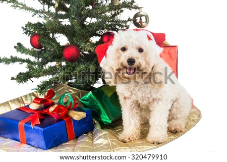 Smiling poodle puppy in Santa hat with Chrismas tree and gifts