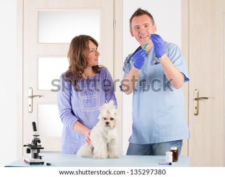 Smiling vet making a checkup of a dog maltese. - stock photo