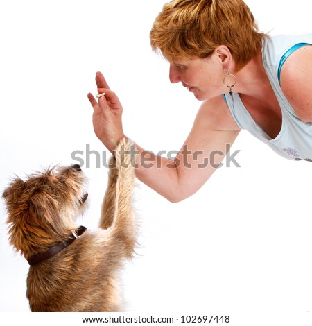 Smiling woman gives treat to small shaggy dog. They have similar hair color and texture. They face each other in profile, dog's paws on woman's forearm. Isolated on white, square with copy space. - stock photo
